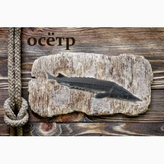 Живая рыба Осётр для пруда