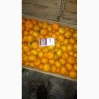 Продам Абхазские мандарины