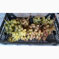 Виноград готовый порадовать своей ценой