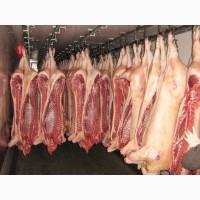 Свинина охлажденная в полутушах оптом 2 кат. 159 р/кг