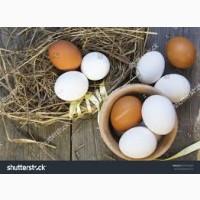 Яйцо куриное Новосибирск
