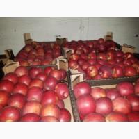 Яблоки калиброванные сорт Глостер