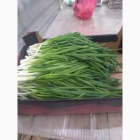 Продам зелёный лук оптом