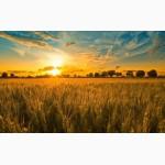 Продам зерновые