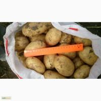 Продам: молодой Картофель В Туле