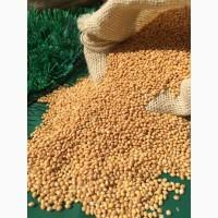 Услуги: отделим качественное зерно, бобы от сорных примесей