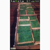 Фермерское хозяйство продает свежую зелень