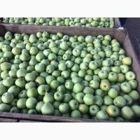 К продаже оптом готовы яблоки Семеренко с доставкой