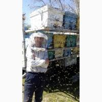 Принимаем заказы на пчелопакеты