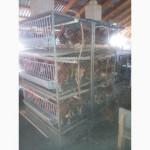 Комплект оборудование для выращивания кур яичных пород и бройлеров