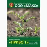 Реализуем семена нута сорта «ПРИВО-1» - элиту и РС