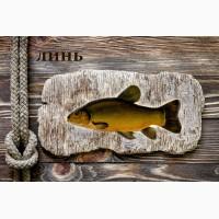 Живая рыба Линь для пруда