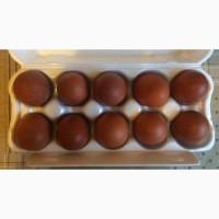 Инкубационное яйцо кур породы МАРАН черно-медный