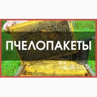 Пчелопакеты и пчелосемьи
