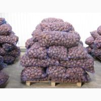 Картофель оптом от производителя. урожай 2019 года