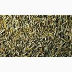 Продам семена овсяницы красной, тросниковидной, луговой