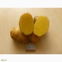 Картофель сортов Ароза, Наташа