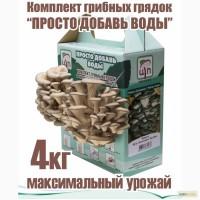 Комплект для домашнего выращивания грибов вешенка