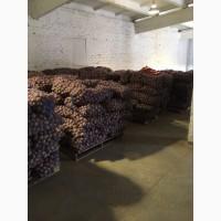 Картофель Гала из Беларуси в наличии на складе в СПБ