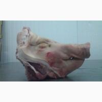 Свинина опт недорого качественно