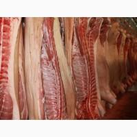 Свинина полутуши 179 руб/кг. от 20т