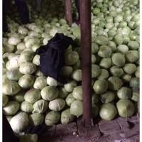 Капуста оптом от от фермерского хозяйства в Саратовской области