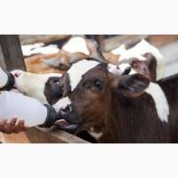 Заменитель сухого цельного молока