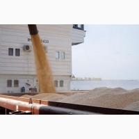 Купим оптом пшеницу с клеем 26-28% на Астрахани