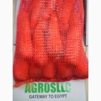 Морковь. Египет