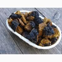 Чага (черный березовый гриб)