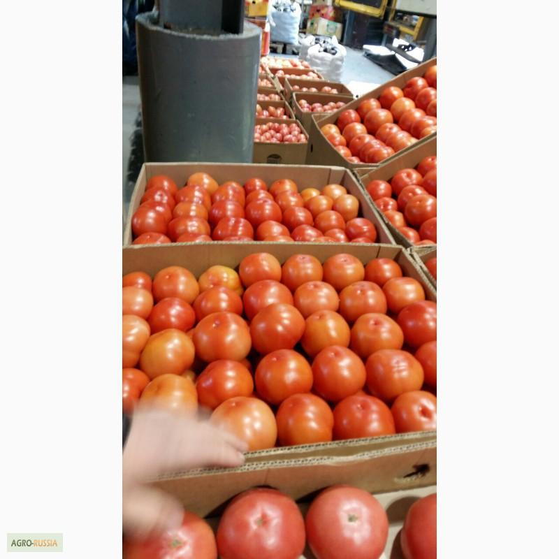 Куплю помидоры оптом москва