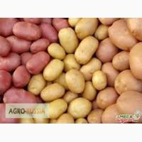 Семенной картофель суперэлита и выше (InVitro)