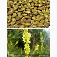 Продам: Семена донника желтого Сибирский 2