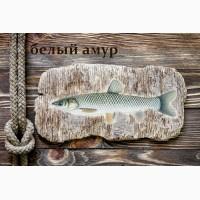 Живая рыба Белый амур для пруда