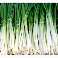 Зелёный лук оптом в москве купить
