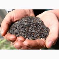 Экспорт Семена рапса в Иран, Сирию, Ливию, Турцию и другие страны FOB, CIF