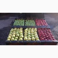 Продаем яблоко Молдавское