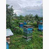 Продам пчёл с ульями (рут)