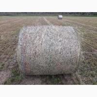 СПК Лесные дали реализует сено злаковое (посевное), сенаж (посевной) урожай 2020г