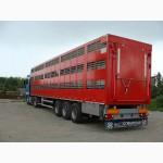 Полуприцеп для перевозки свиней овец и КРС