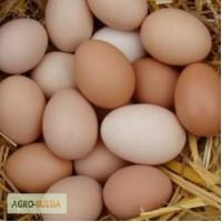 Яйцо С0 отборные оптом