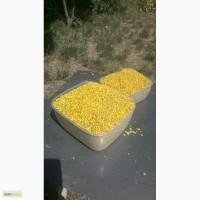 Продам пыльцу
