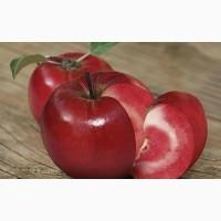 Яблоки красных сортов от 10.00 - 75.00 руб / кг