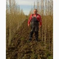 Продам саженцы, сеянцы и семена хвойных лиственных растений