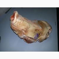 Головы целые свиные ГОСТ 32244-2013