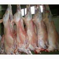 Производство и переработка мяса, оптовая поставка куриного мяса