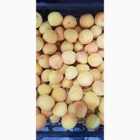 Черешня вишня абрикос Клубника