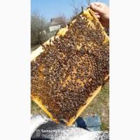 Подам пчелопакеты 1000руб
