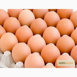 Яйцо С2 оптом