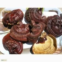 Продам грибы рейши сушеные